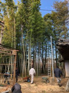 大木の伐採04